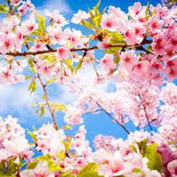 Пословицы про весну
