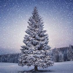 Пословицы про зиму